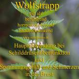 Steckbrief Wolfstrapp