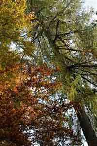 Herbstwald Herbsttagundnachtgleiche