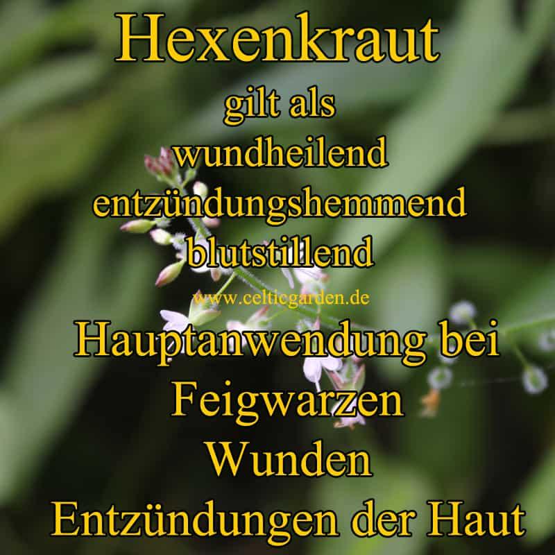 Steckbrief Hexenkraut