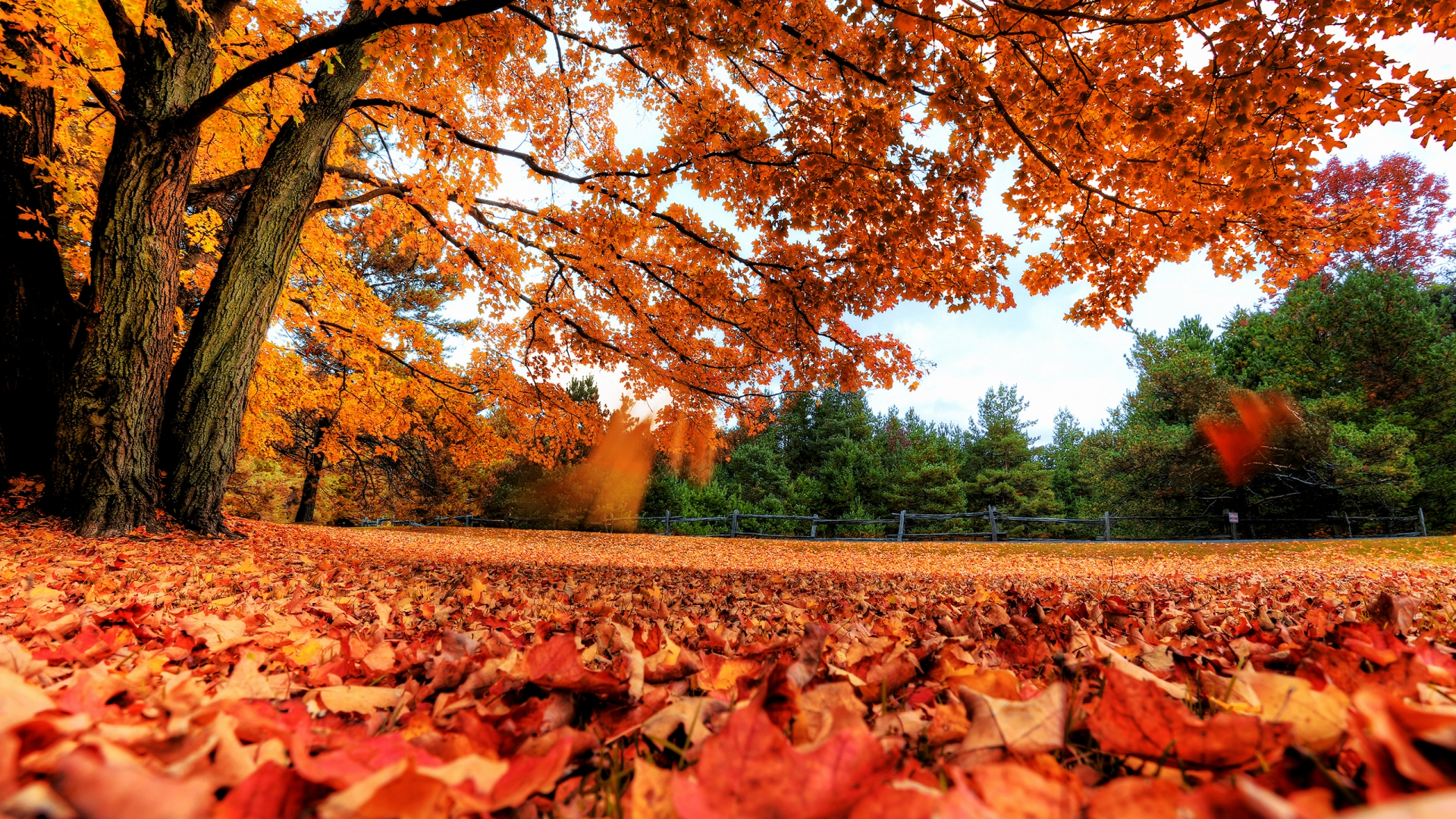 Autumn Leaf Fall Wallpaper All The Leaves Are Brown Checklist For Gardening