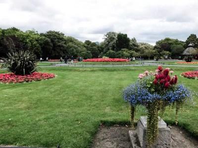 Flowers in St Stephen's Green, Dublin