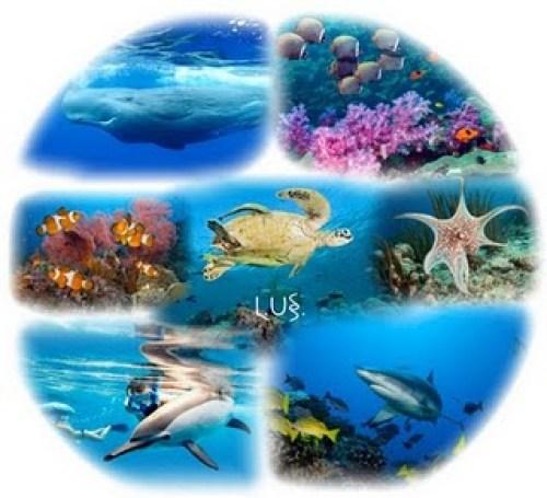 biologia_marina