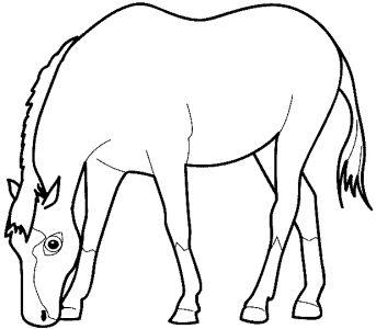 Omalovánky k vytisknutí: Zvířata: Koně, zebry
