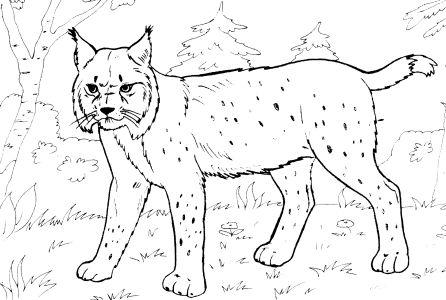 Omalovánky k vytisknutí: Zvířata: Lesní, ostatní