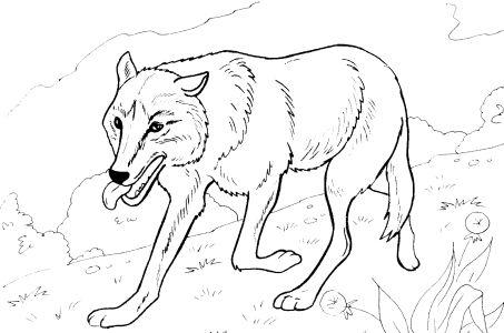 Omalovánky k vytisknutí: Zvířata: Liška, vlk