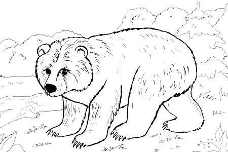 Omalovánky k vytisknutí: Zvířata: Medvídek