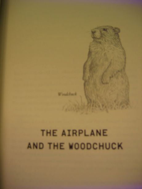 The drawing of the woodchuck