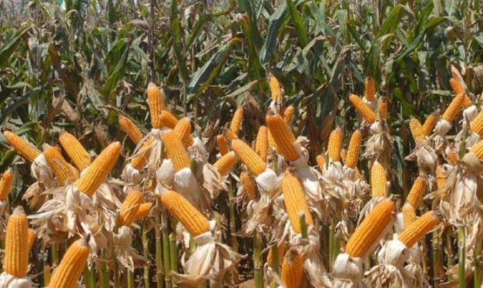 soja, milho e algodão