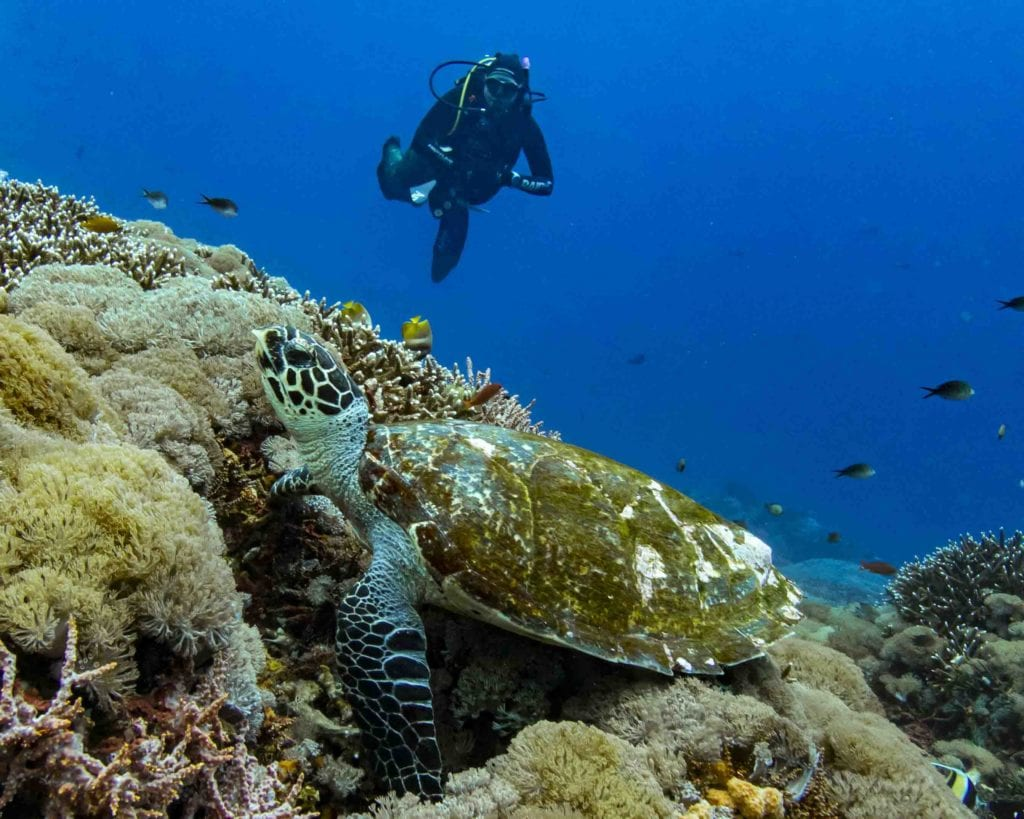 One of our divers meeting a turtle. Can recreation always go hand in hand with marine life?