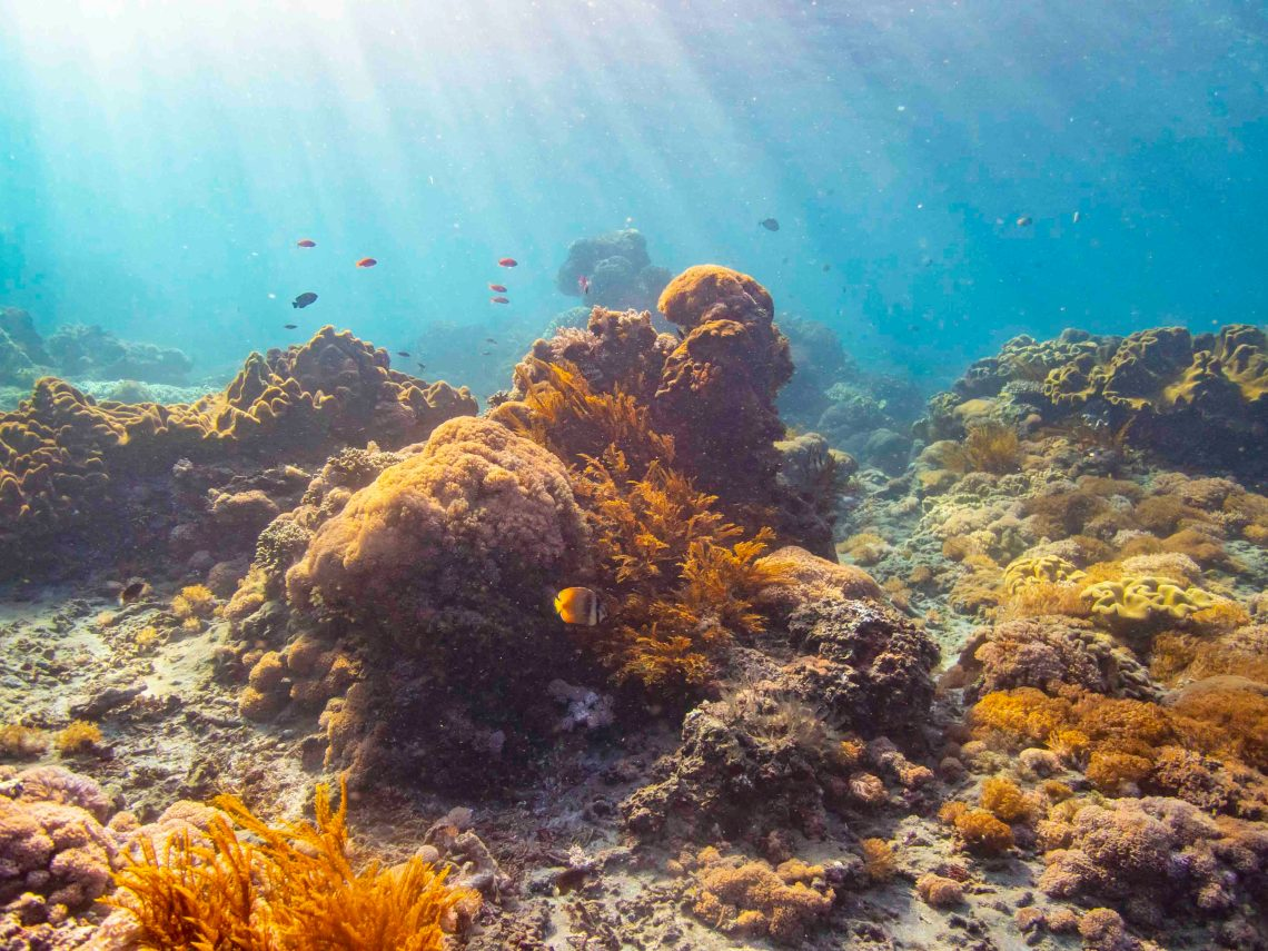 Beautiful reefs at dive site Gamat Bay worth preserving.