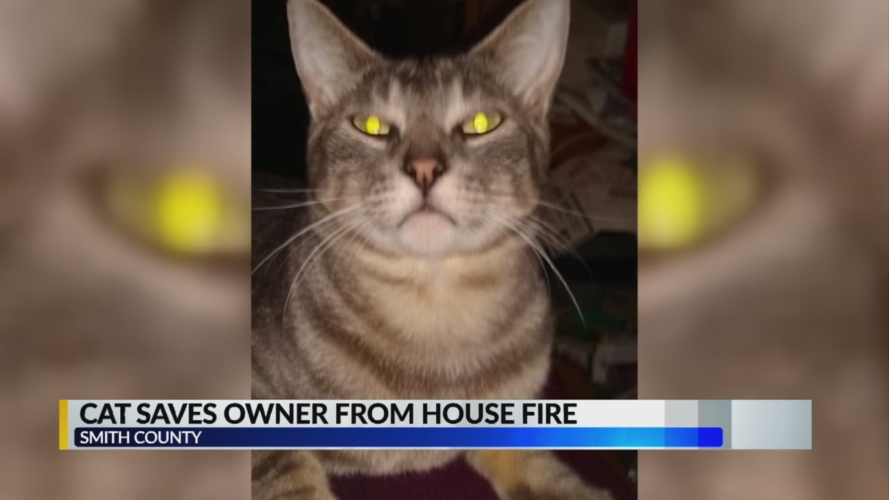 Cat_saves_owner_9_20190424230451-842162548
