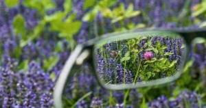 ¿Qué tanto sabes sobre la miopía?