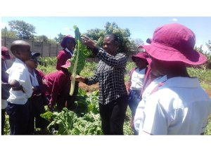 centenary-school-agriculture-lesson-harvesting-time