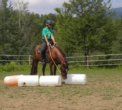 Training a young horse