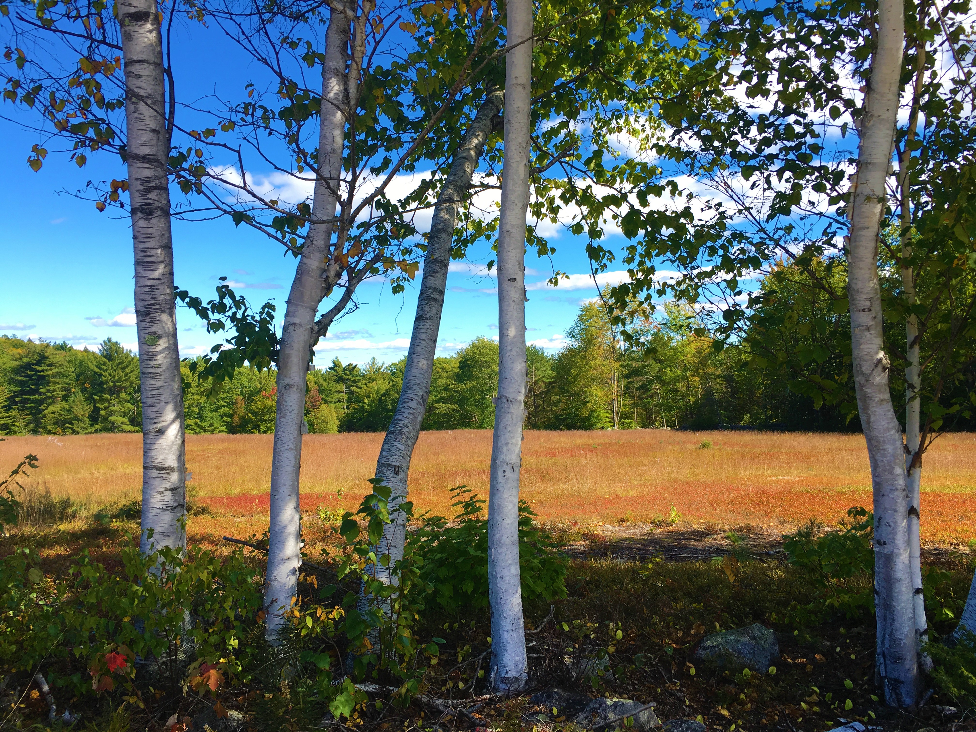 Best Places For Fall Foliage In Maine - Center Lovell Inn