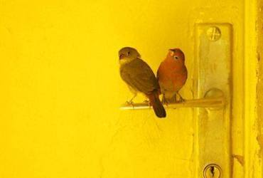 vogels en deur