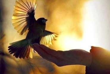 golden pigeon
