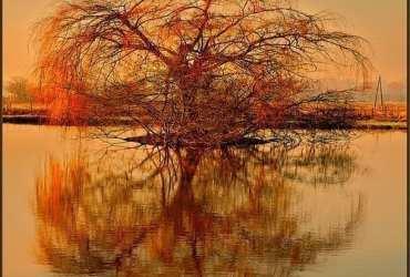 gouden boom