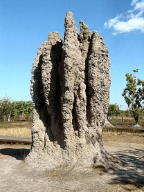 Emergent Termite Cathedral