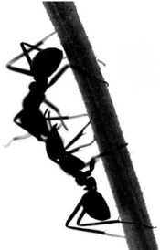 ants are us-2