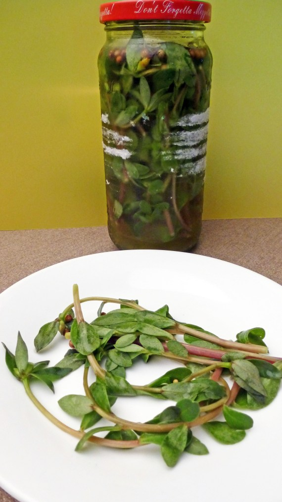 Pickled Purslane
