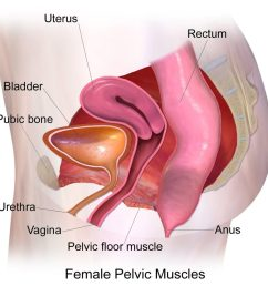 post natal pop all you need to know about pelvic organ prolapse [ 1024 x 1024 Pixel ]