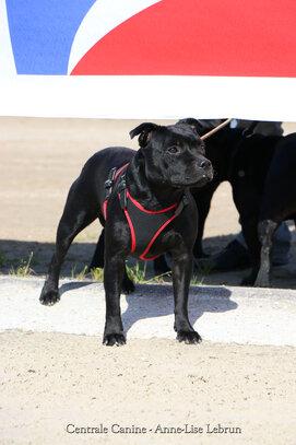 Les chiens de race 5