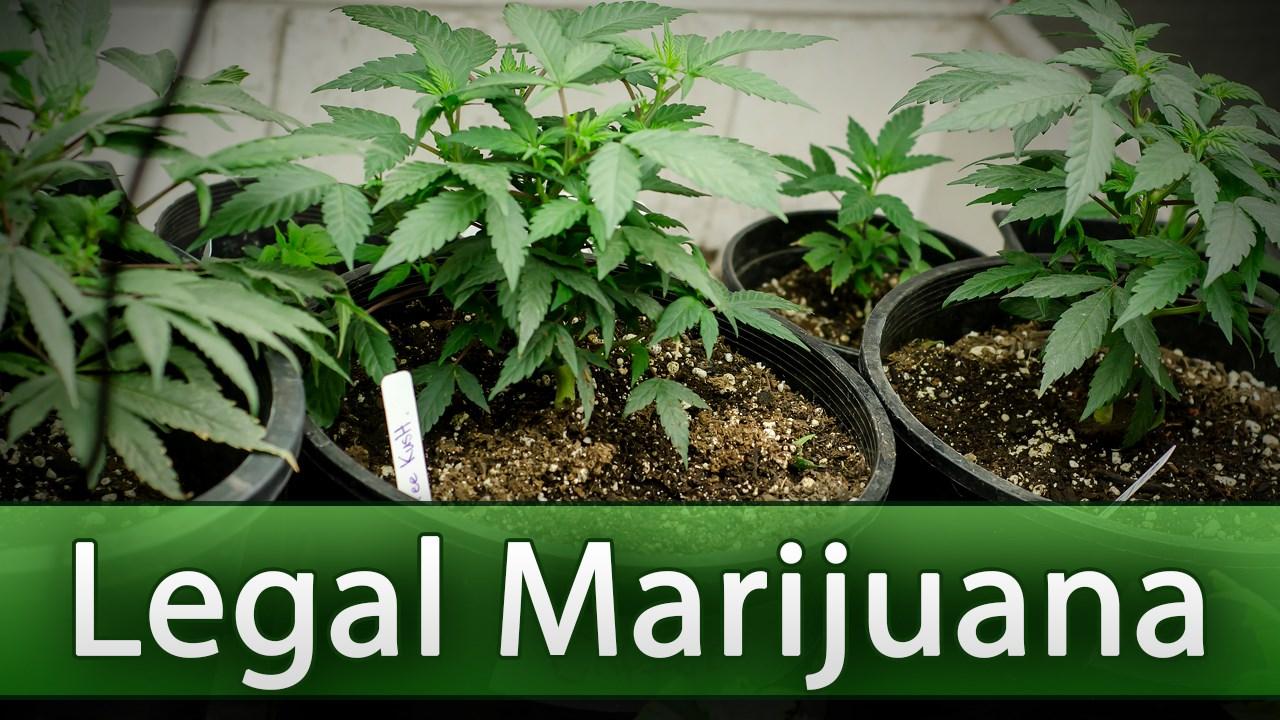 LEGAL WEED_1557435456233.jpg.jpg