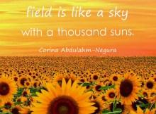 A sunflower field is like a sky with a thousand suns.