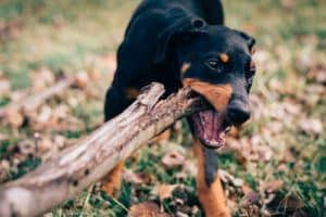 Best bully sticks for dogs