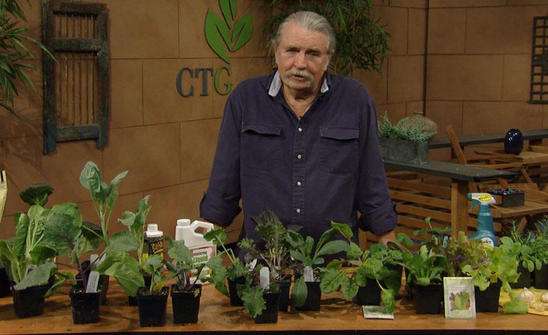 Fall Winter Vegetables John Dromgoole Central Texas Gardener