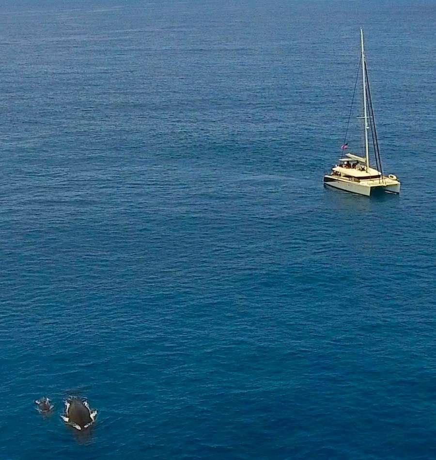 LADY KATLO yacht image # 11
