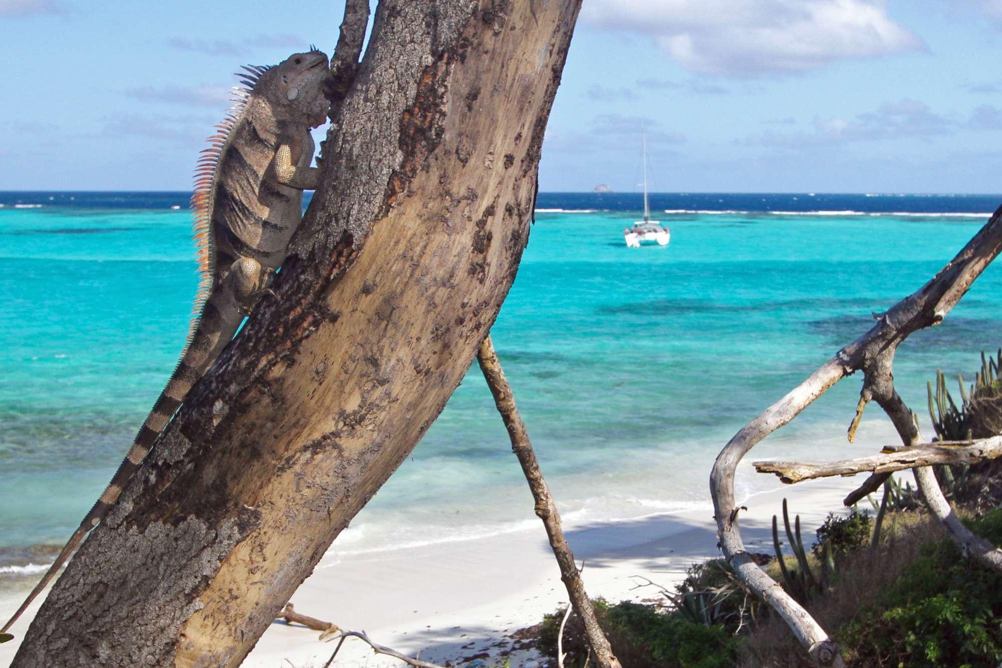 Image of ISOLABLUE yacht #14