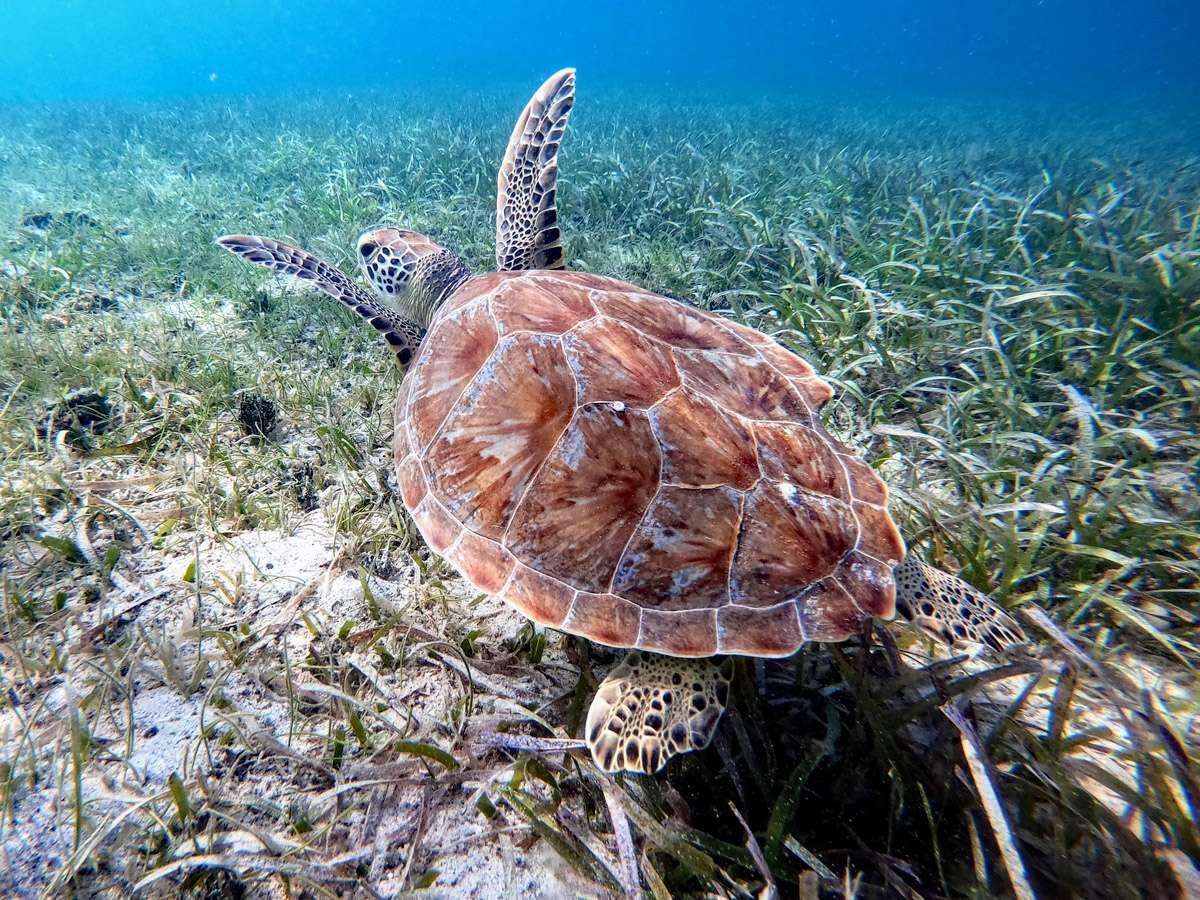 Image of KUMA TOO yacht #17