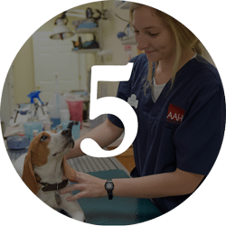 female student interning at a veterinary office
