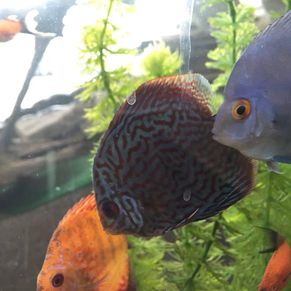 Freshwater fish store near me - Fish