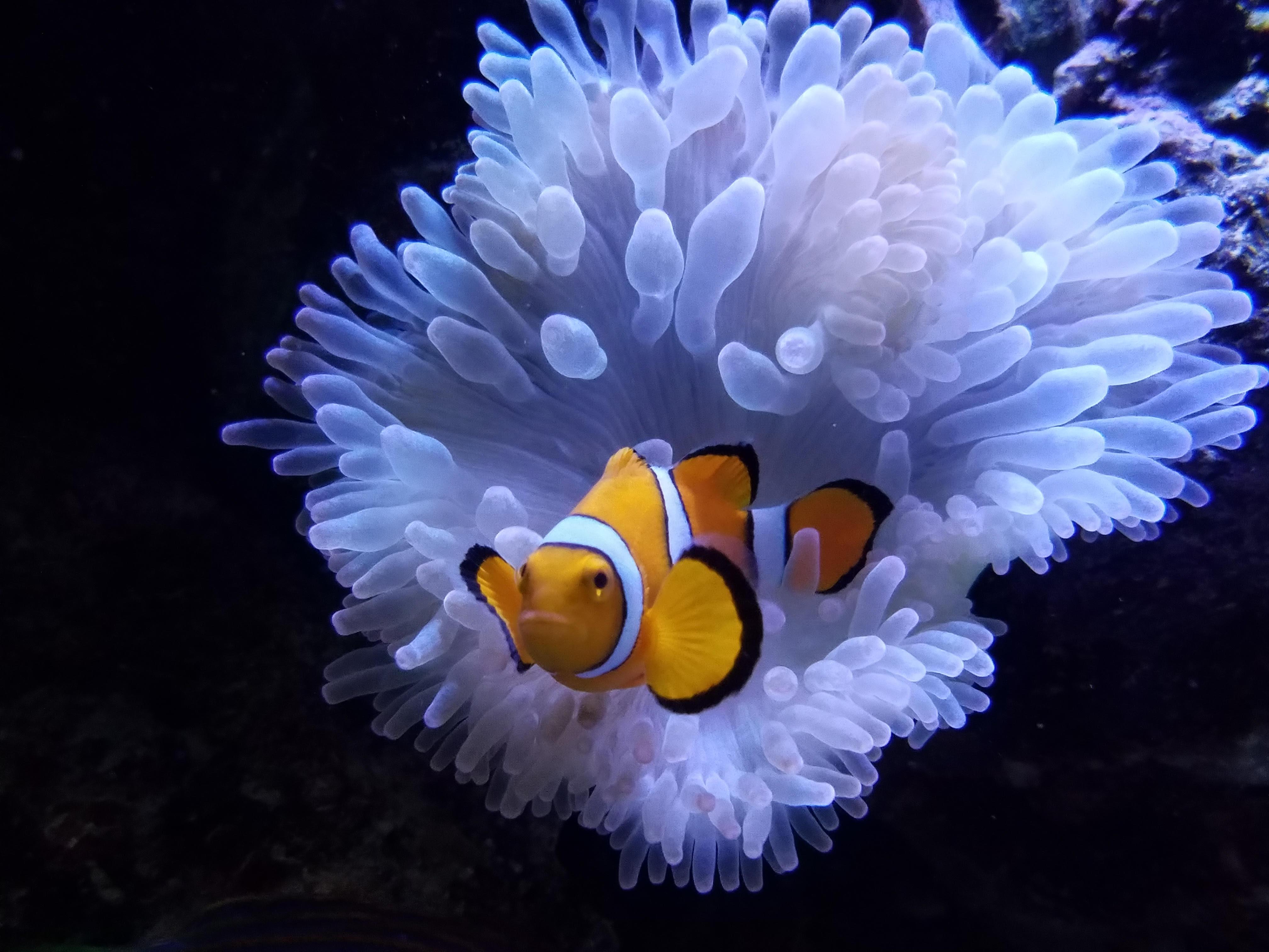 anemone centreville aquariumcentreville aquarium