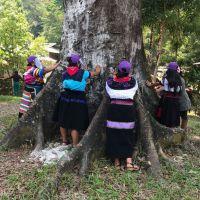 Comunicado zapatista: Ayer: La teoría y la práctica