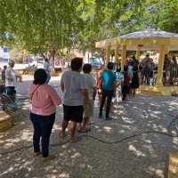 Concluye consulta maya contra la industria porcícola