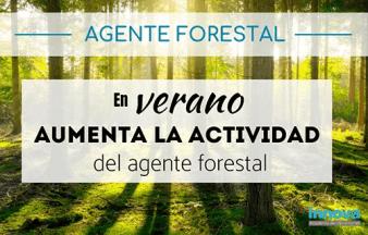 trabajo guarda forestal