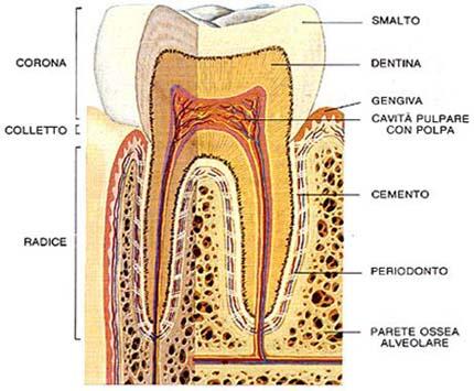 urina dellherpes che brucia e scarico frequente