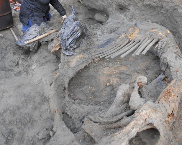 scavi-mammut