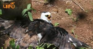 Águila Centro Urku