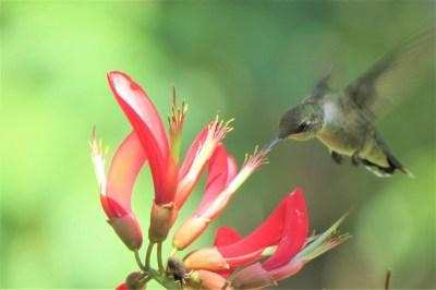 bird-2530184_1920