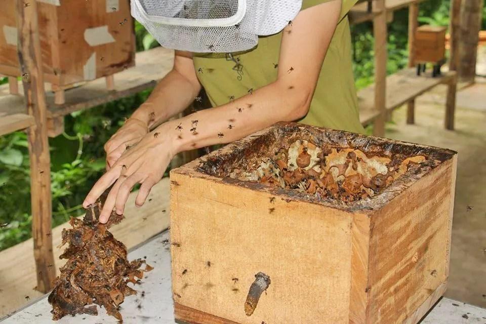 Centro Urku patenta nuevas cajas de crianza de abejas sin aguijn