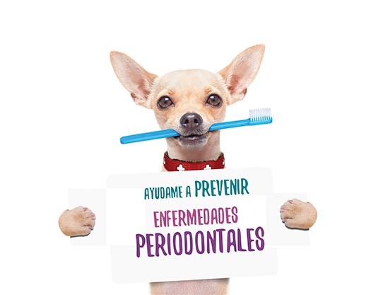 periodontitis-animal