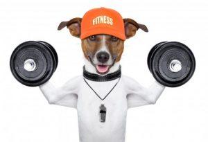 Perro-beneficios-para-la-salud-484x330
