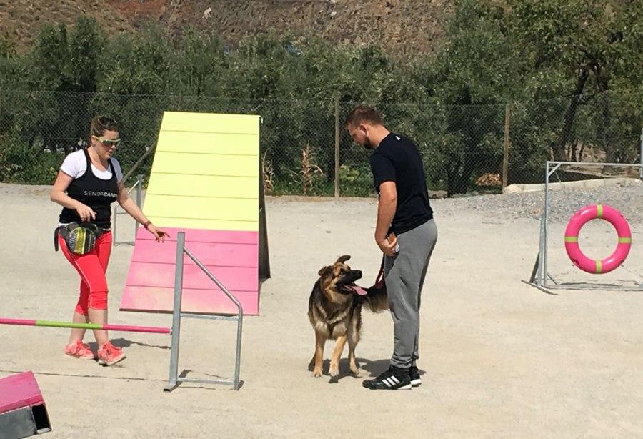 adiestramiento-perros
