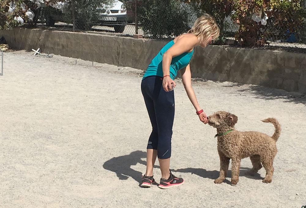 entrenando-perro
