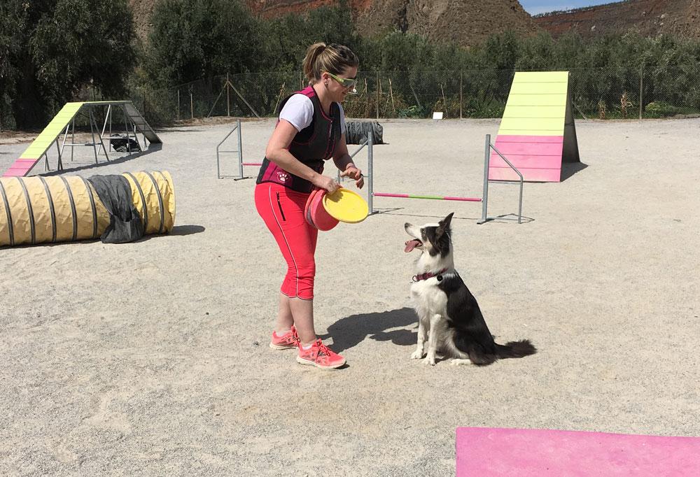perro-frisbik